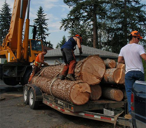 Loading Logs for Removal