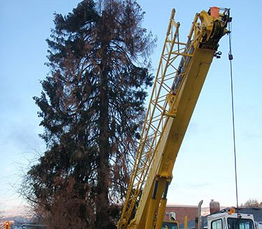 Overhead crane for tree removal