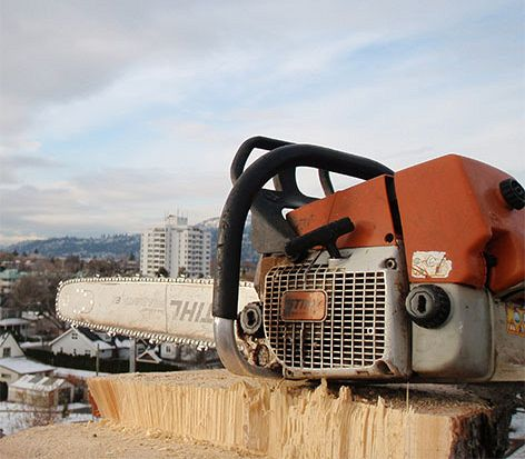 Chainsaw Tree Removal
